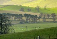 Beautiful Farm Scene