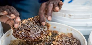 A Sweeter Future for Zambian Honey