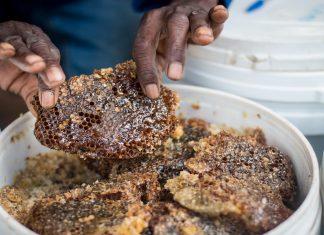 A Sweeter Future for Zambian Honey